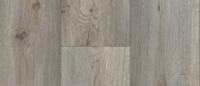 Silk Oak